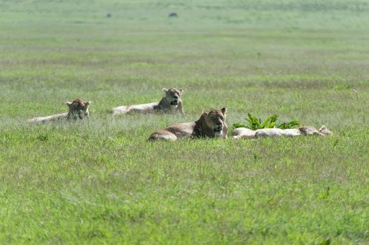 20130114_Tanzania_088