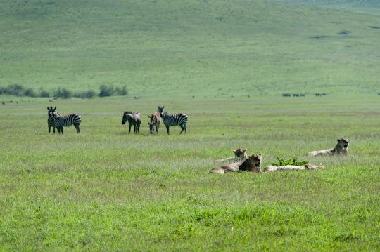20130114_Tanzania_090