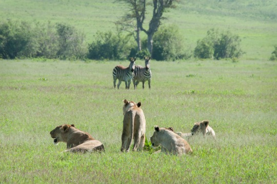 20130114_Tanzania_139