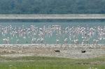 20130114_Tanzania_315