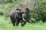 20130114_Tanzania_396