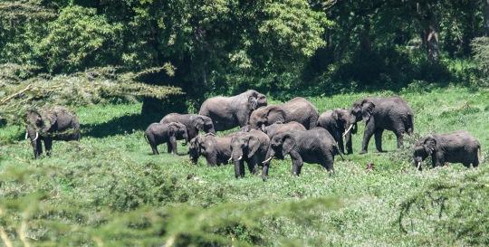 20130114_Tanzania_414