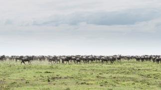 20130115_Tanzania_037