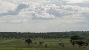 20130115_Tanzania_252
