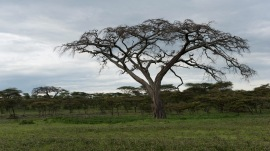20130115_Tanzania_262