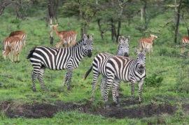 20130115_Tanzania_266