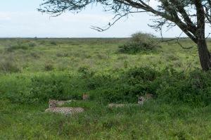20130116_Tanzania_123