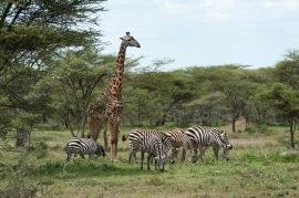 20130116_Tanzania_308