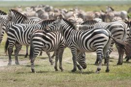 20130117_Tanzania_158
