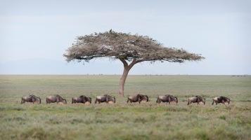 20130117_Tanzania_452