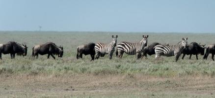 20130118_Tanzania_133