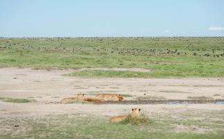 20130118_Tanzania_724