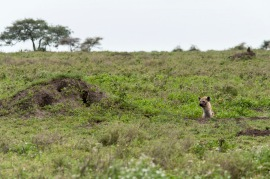 20130115_Tanzania_243