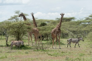 20130116_Tanzania_283