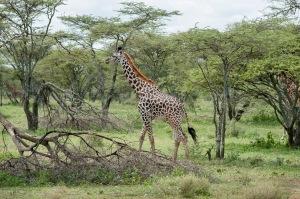 20130116_Tanzania_294
