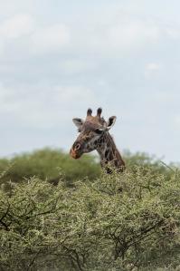 20130116_Tanzania_310